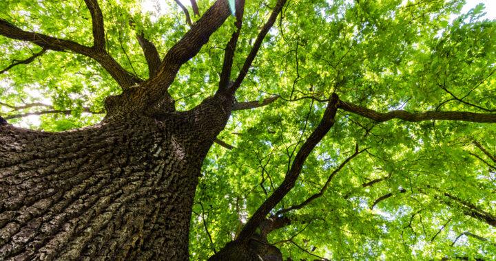 Saving the World with Metaphor: Toward an Ecological Poetics